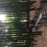 鎌倉 報国寺の竹林へのアクセス方法 チケット購入で抹茶も頂けます!