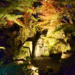 徳川園 紅葉とライトアップされ幻想的な雰囲気に