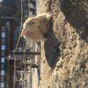 愛知牧場 動物と触れ合える 子供が遊べるおすすめスポット