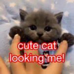 cute cat looking me!