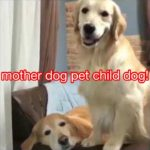 mother dog pet child dog!
