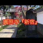 圓照寺『新宿』は綺麗で落ち着く空間(動画)
