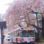 東京に満開の桜と季節外れの雪が降り不思議な風景が作られました